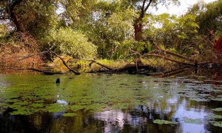 Delta Dunării, un paradis natural pe care merită să-l vezi